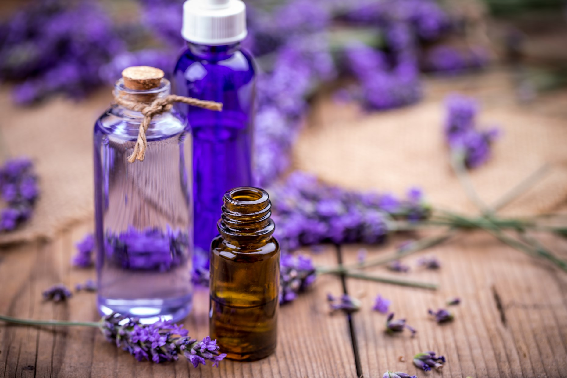 Bottles of essential oil and fresh lavender flowers